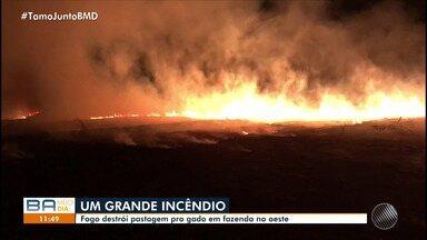Incêndio atinge fazenda de capim em Luís Eduardo Magalhães, no oeste - O incêndio começou na noite de quinta (20); confira os detalhes.