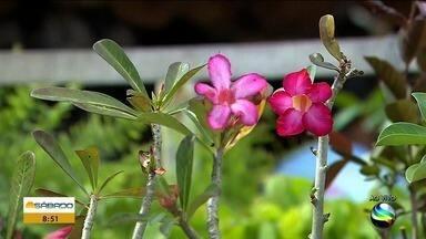Saiba como fica com clima com a chegada da Primavera - Saiba como fica com clima com a chegada da Primavera.
