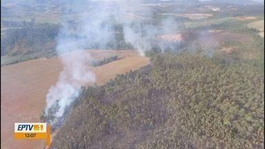 Fogo atinge cerca de 1,5 mil metros de vegetação em Poços de Caldas (MG) - Fogo atinge cerca de 1,5 mil metros de vegetação em Poços de Caldas (MG)
