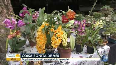 Feira traz exposição de orquídeas e bonsais em Salvador - A exposição acontece no Palacete das Artes; conheça.