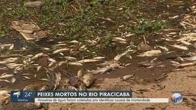 Moradores encontram vários peixes mortos no Rio Piracicaba na noite de quinta-feira - Principal preocupação é com a ocorrência de risco ambiental ou contaminação.