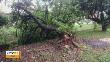 Chuva e vento forte causa estragos em Pirassununga, SP - Árvores caíram e o trânsito precisou ser interditado.
