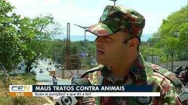 Delegacia que investiga maus tratos contra animais começa a funcionar em Fortaleza - Saiba mais em g1.com.br/ce