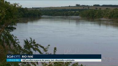 IAP proíbe pesca de pacu, jaú, pintado e dourado no rio Ivaí - Segundo o Instituto Ambiental do Paraná, a proibição é para garantir a reprodução das espécies.