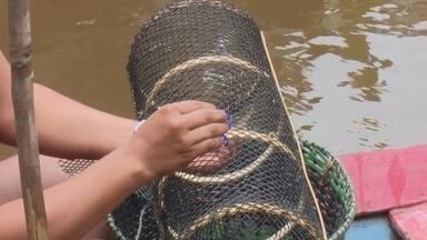 Matapi sintético torna pesca de camarão mais sustentável - Objeto utilizado na pesca do crustáceo não permite a retirada de filhotes do rio, preservando a espécie.