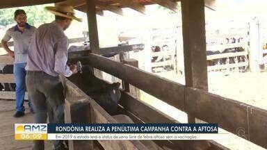 Rondônia realiza penúltima campanha de vacinação contra aftosa - Notícias do agronegócio, desta terça.
