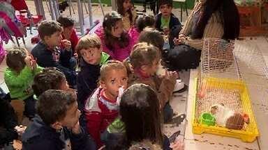 Porquinho da Índia incentiva leitura em escola de Barbacena - Crianças leem para o porquinho e cuidam dele em sala de aula e em casa.