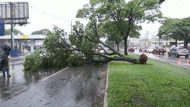 Ventos passam dos 110 km/h durante temporal em Maringá - Uma aeronave que havia acabado de pousar foi arrastada pelo vento.