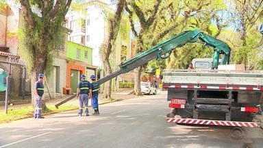 Prefeitura diz que 8 mil pedidos de podas em Porto Alegre são de baixa gravidade - Assista ao vídeo.
