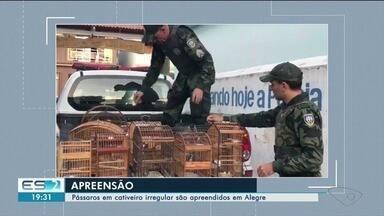 Polícia Ambiental apreende pássaros silvestres no Caparaó, ES - Fiscalização foi em Alegre.