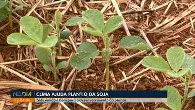 Fenômeno do El Niño aumenta chuvas que ajudam no desenvolvimento da safra - Com os temporais dos últimos dias muitas pessoas foram afetadas. Defesa Civil está ajudando os prejudicados.