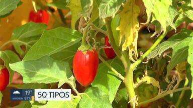 Shopping de Taguatinga cria horta comunitária - Espaço é utilizado por clientes, funcionários e moradores da região.
