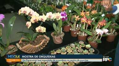 Centro de Eventos de Paranavaí recebe exposição de orquídeas - O evento começou neste sábado, 27, e vai até domingo, 28.