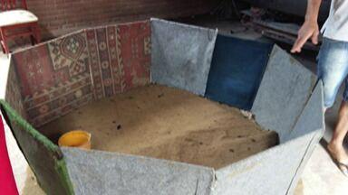 Policia descobre casa onde acontecia rinha de galo em Arujá - Endereço no bairro do Planalto tinha mais de 20 galos e 15 galinhas.