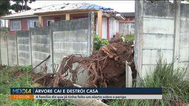Árvore cai em cima de casa e destrói telhado - Já no Vista Alegre três sobrados foram interditados depois que o muro dos fundos caiu sobre o terreno do vizinho