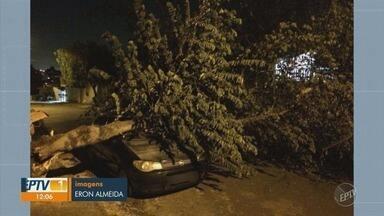 Árvore cai em cima de carro estacionado no Jardim Icaraí em Campinas - Ninguém se feriu.