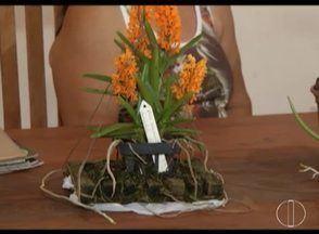 Cresce cultivo de orquídeas em Novo Horizonte, no Norte de Minas - Produtores têm recebido premiações em vários concursos.