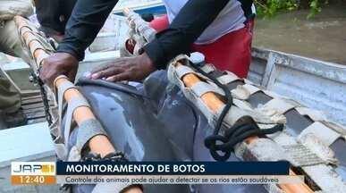 Amapá recebeu uma expedição inédita para monitoramento de botos - Controle dos animais podem ajudam a detectar se os rios estão saudáveis.