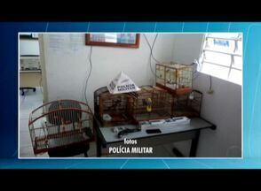 Homem é preso com maconha, arma de fogo e pássaros silvestres em Palmópolis - Na casa do suspeito foram encontrados uma bucha e 20 cigarros prontos da mesma droga, além de oito pássaros da fauna silvestre e uma garrucha de dois canos.