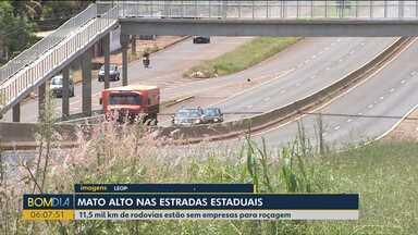 Mato alto compromete sinalização em vários trechos de rodovias no Paraná - 11,5 mil km de rodovias estão sem empresas para roçagem.