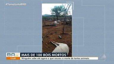 Mais de cem cabeças de gado morrem em Tanhaçu, no sudoeste da Bahia - Causas das mortes estão sendo investigadas.