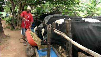 Família do Centro-Oeste de Minas dá exemplo com fazenda autossustentável - Eles geram alimento para o gado leiteiro, usam água da própria represa para irrigar piquetes e criam outros animais para gerar renda.