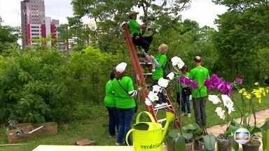 'Verdejando' traz de volta a vegetação típica das cidades - O projeto 'Verdejando' busca qualidade de vida.