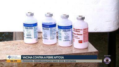 Prorrogação de vacinação contra febre aftosa não está definida no RS - Meta é vacinar cinco milhões de animais no estado.