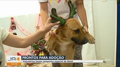 Voluntários criam campanha para adoção de cães em Tubarão - Voluntários criam campanha para adoção de cães em Tubarão