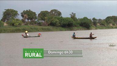 Confira os destaques do 'Mirante Rural' - Programa voltado para o agronegócio é apresentado todo domingo, a partir das 6h, pela jornalista Jéssica Melo.