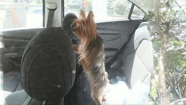 Cachorro é encontrado preso dentro do carro - Proprietária foi alertada e depois liberada.