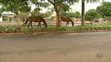Quebra de contrato deixa animais de grande porte soltos nas vias de Ribeirão Preto - Moradores reclamam que serviço foi suspenso há dois meses.
