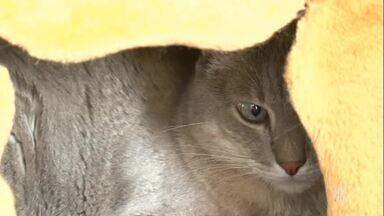 Hotel para gatos - Assista ao vídeo