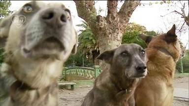 O bem também para os cãezinhos