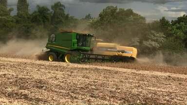 Falta de chuva compromete safra da soja e colheita é antecipada - Quebra deve ultrapassar os 8% na região de Cascavel