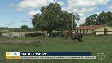 Agronegócio gerou mais emprego e aumentou a produção em 2018 no Pará - Além de produtores, empresários de outros setores também comemoram o aumento na produção.