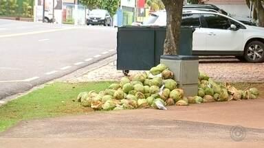Moradores reclamam do acúmulo de coco ao lado de lixeiras da Represa Municipal - Moradores estão reclamando do acúmulo de coco ao lado das lixeiras da Represa Municipal de São José do Rio Preto (SP).