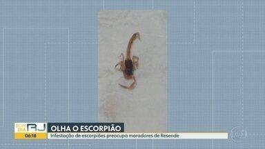 Infestação de escorpiões preocupa moradores de Resende - Calor e umidade aumentam quantidade de escorpiões.
