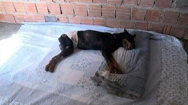 Cachorro é socorrido após ser enterrado vivo na Barra de São Miguel - Ele foi tirado do buraco por moradores e levado para um veterinário.