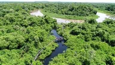 Partiu Férias no Pantanal - Pertinho de Campo Grande, na cidade de Miranda, no Mato Grosso do Sul, os turistas têm a oportunidade de conhecer os animais da região e a culinária pantaneira.