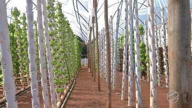 Sistema de produção de hortaliças otimiza espaço nas propriedades - Além disso, economiza também água e tempo de trabalho.