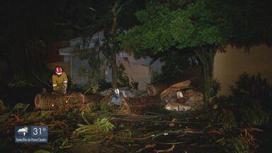 Chuva e ventania derrubam mais de 10 árvores em São Carlos - Defesa Civil registrou oito milímetros em 30 minutos e vento chegou a 70 quilômetros por hora.