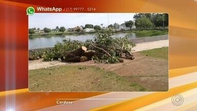 Moradores de Cardoso reclamam de corte de árvores da Lagoa Municipal - Os moradores de Cardoso (SP) estão reclamando do corte de árvores da Lagoa Municipal, que é o cartão postal da cidade.