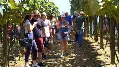 Resultado de imagem para Sommeliers cegos visitam vinícola em São Roque