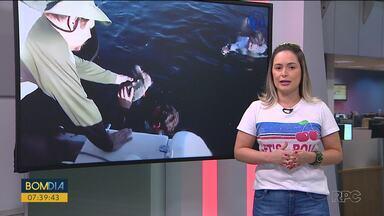 Animais resgatados são devolvidos ao mar - Dois lobos marinhos e uma tartaruga foram soltos em Pontal do Paraná.