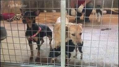 Brumadinho: como funciona o resgate de animais - Os resgates são feitos por veterinários do Conselho de Veterinária. Os animais estão sendo levados para uma fazenda. Alguns tiveram que ser sacrificados.
