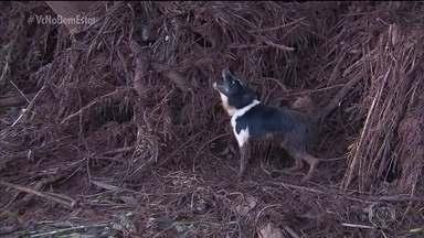 Cães farejadores ajudam nas buscas - Eles são verdadeiros heróis ao lado dos bombeiros no trabalho de rescaldo em Brumadinho.