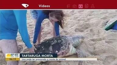 Tartaruga aparece morta na Praia da Costa de Vila Velha, no ES - Lixo pode ter provocado a morte do animal.