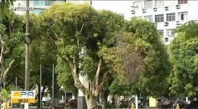 Com aumento no volume das chuvas Semas alerta para cuidados com árvores - Um perigo quando não recebem a devida atenção já que a queda de uma árvore pode causar grandes prejuízos.