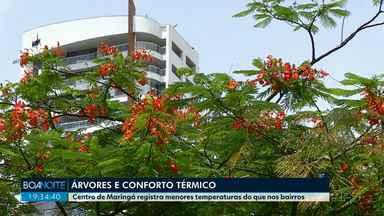 Centro de Maringá registra menores temperaturas do que nos bairros - Entenda o motivo de as árvores serem tão importantes para a cidade